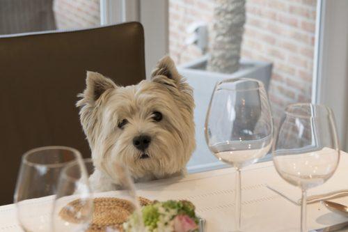 Smell-feast:一个到处寻找宴会并争取被邀请的人
