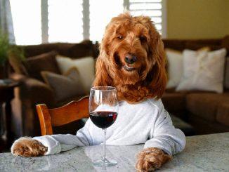 """狗年旺旺,除了dog还有各种汪汪与""""狗""""有关的英语常用同义词"""