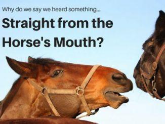 英语习语 | 与马相关的英语成语和谚语