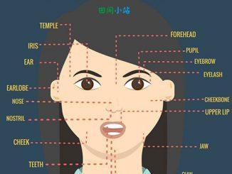 图说英语词汇 | 人脸17个部位的英语词汇中英对照一览表