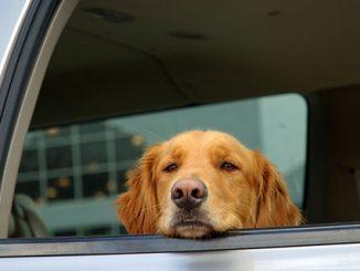 英语幽默 | 他的狗跟在他后面,但是它没有跳上同一辆车