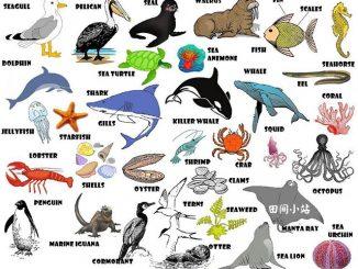 图说英语词汇 | 水族馆内常见水生动植物英语词汇中英对照