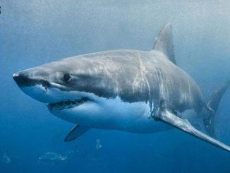 英语热词 | 绑架一条鲨鱼:sharknapping