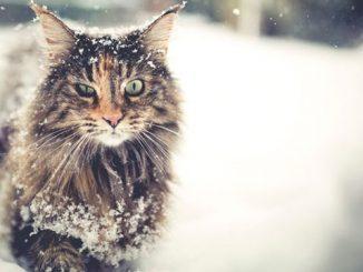 英语短篇小说 | The Cat 猫 玛丽·埃莉诺·威尔金斯·弗里曼