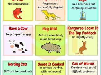 图说英语词汇 | 9个与Animals(动物)相关的英语习语