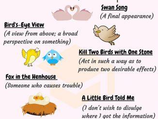 图说英语词汇 | 10个与鸟相关的英语习语