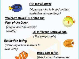 图说英语词汇   10个与鱼相关的英语习语