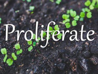 小词详解 | proliferate