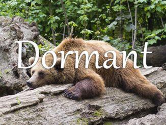 小词详解 | dormant