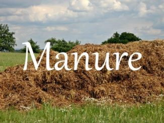 小词详解 | manure