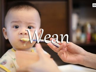 小词详解 | wean